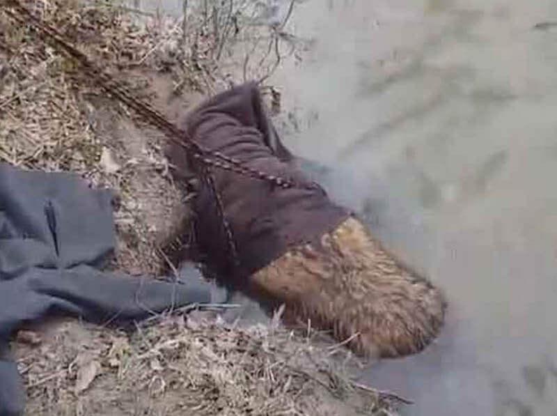 diificult-beaver-84486