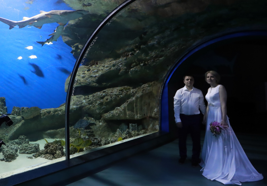 A newly wedded couple at the Moskvarium Center of Oceanography and Marine Biology, where a registry office has opened.