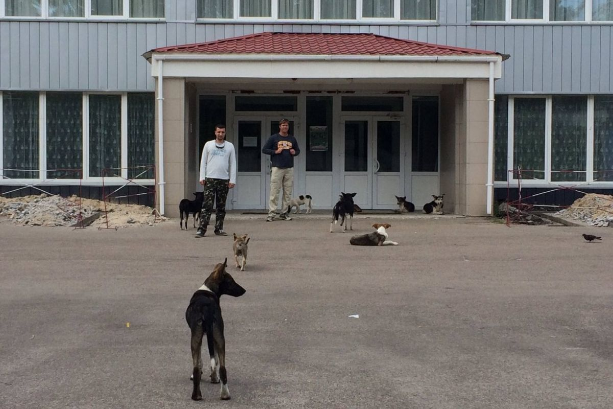 dogs of chernobyl waiting outside a caf for their lunch