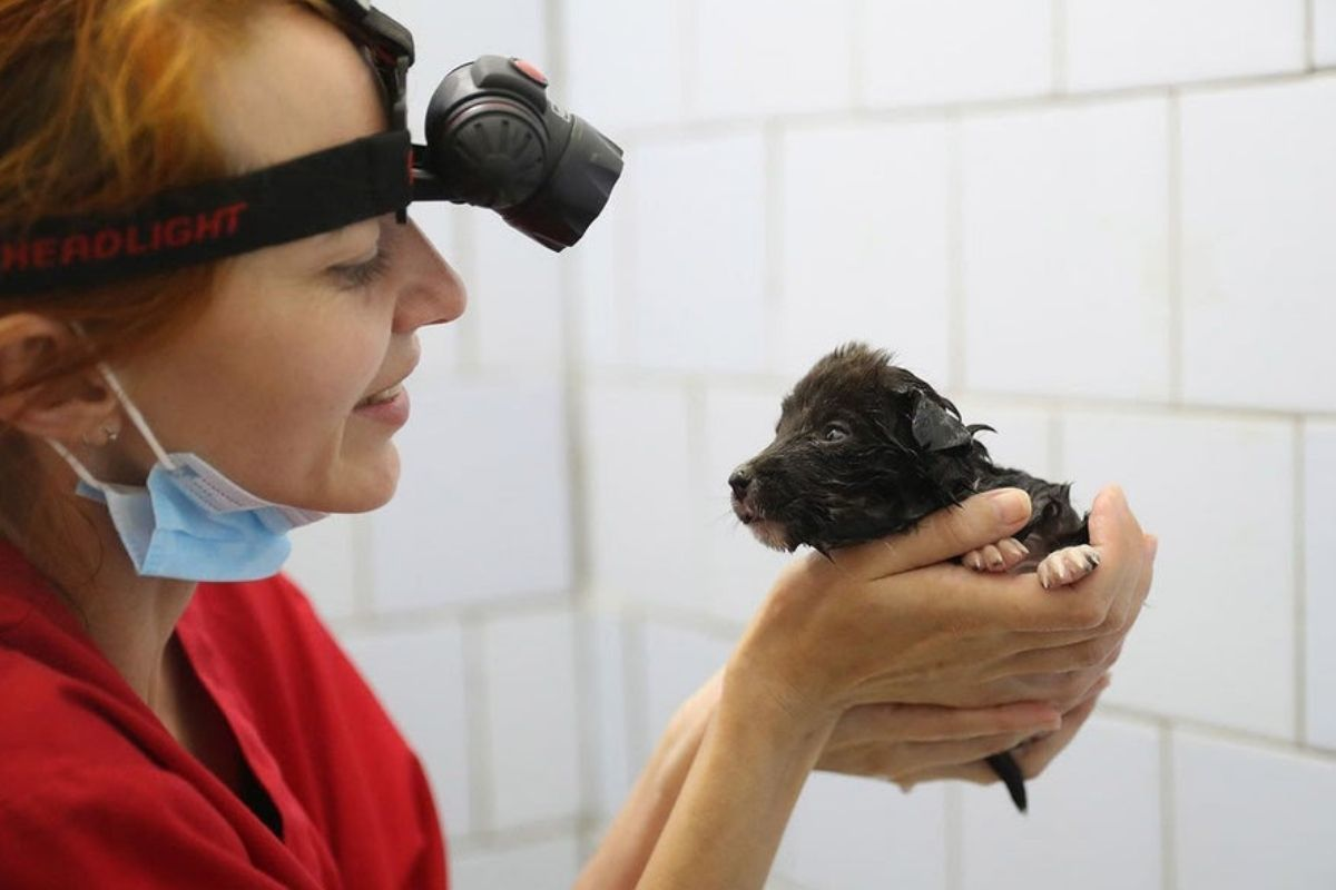 vet at chernobyl working with animals puppy
