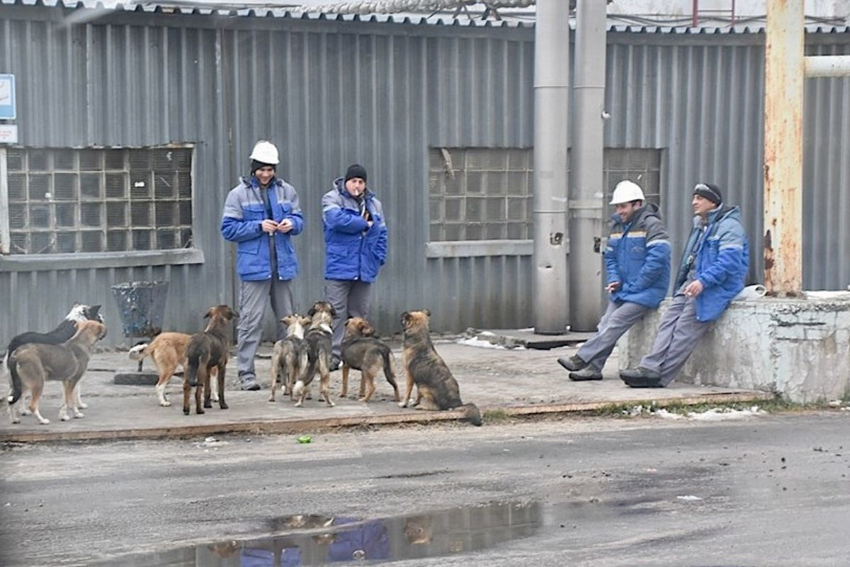 chernobyl dogs begging for food