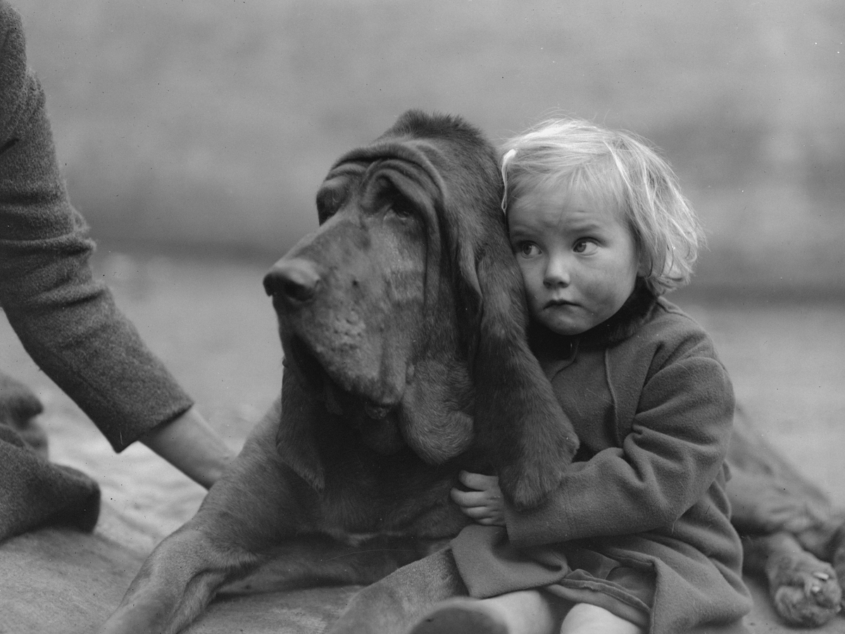 Bloodhound, Champion Leo of Reynalton, is cuddled by a rather worried-looking Dorothy Horder.