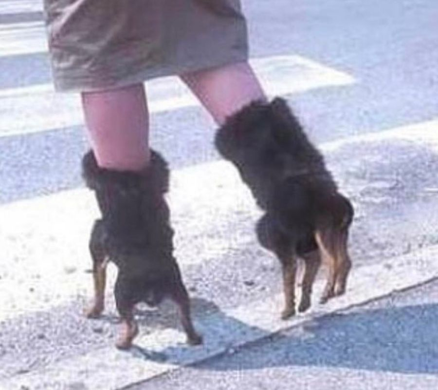 boots with dogs on them