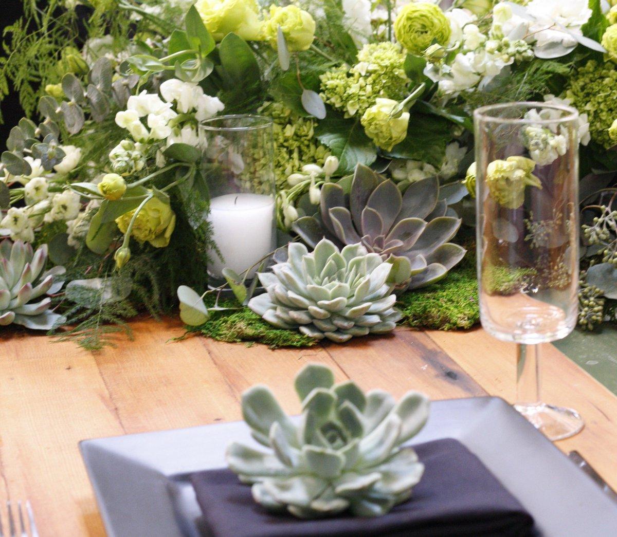Succulent oasis for Bec and Lauren's wedding
