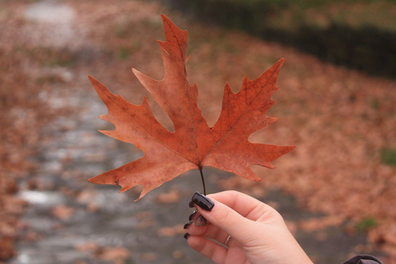 A woman with dark nails hold a fall leaf before a road riddled with leaves