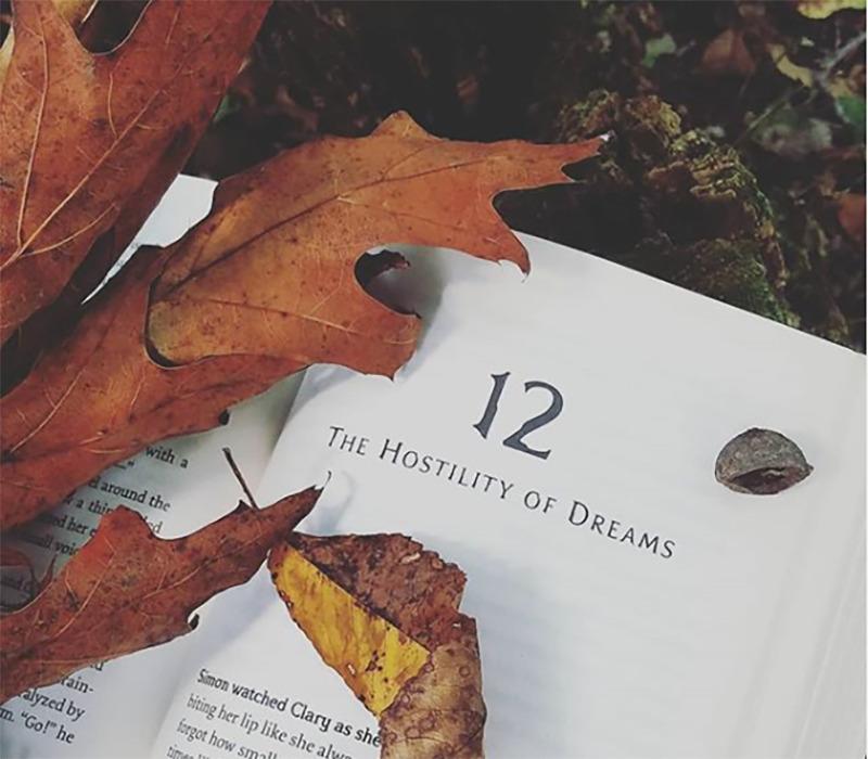 Fallen leaves overlay an open book