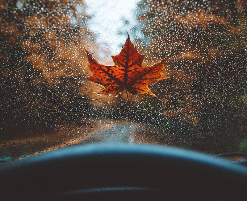 A wet leaf is surrounded by raindrops on a car's windshield