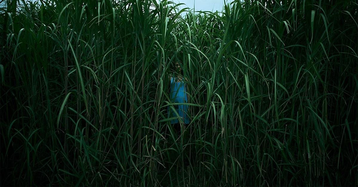 a woman hidden behind tall grass blades