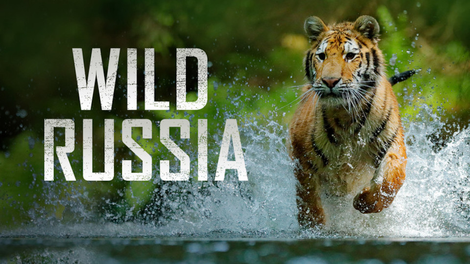 Wild Russia Is A Breathtaking Documentary