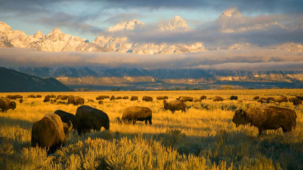 America's National Parks Is Awe-Inspiring