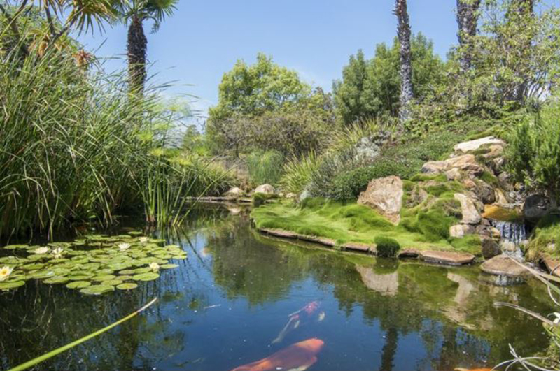 Oprah's koi pond features moss and a mini waterfall.