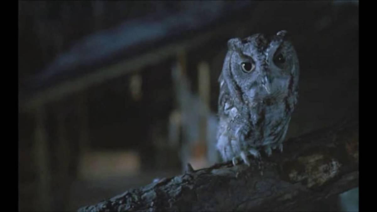 my cousin vinny screech owl not a prop