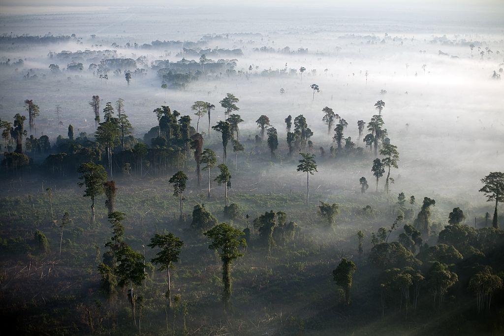 endangered forests