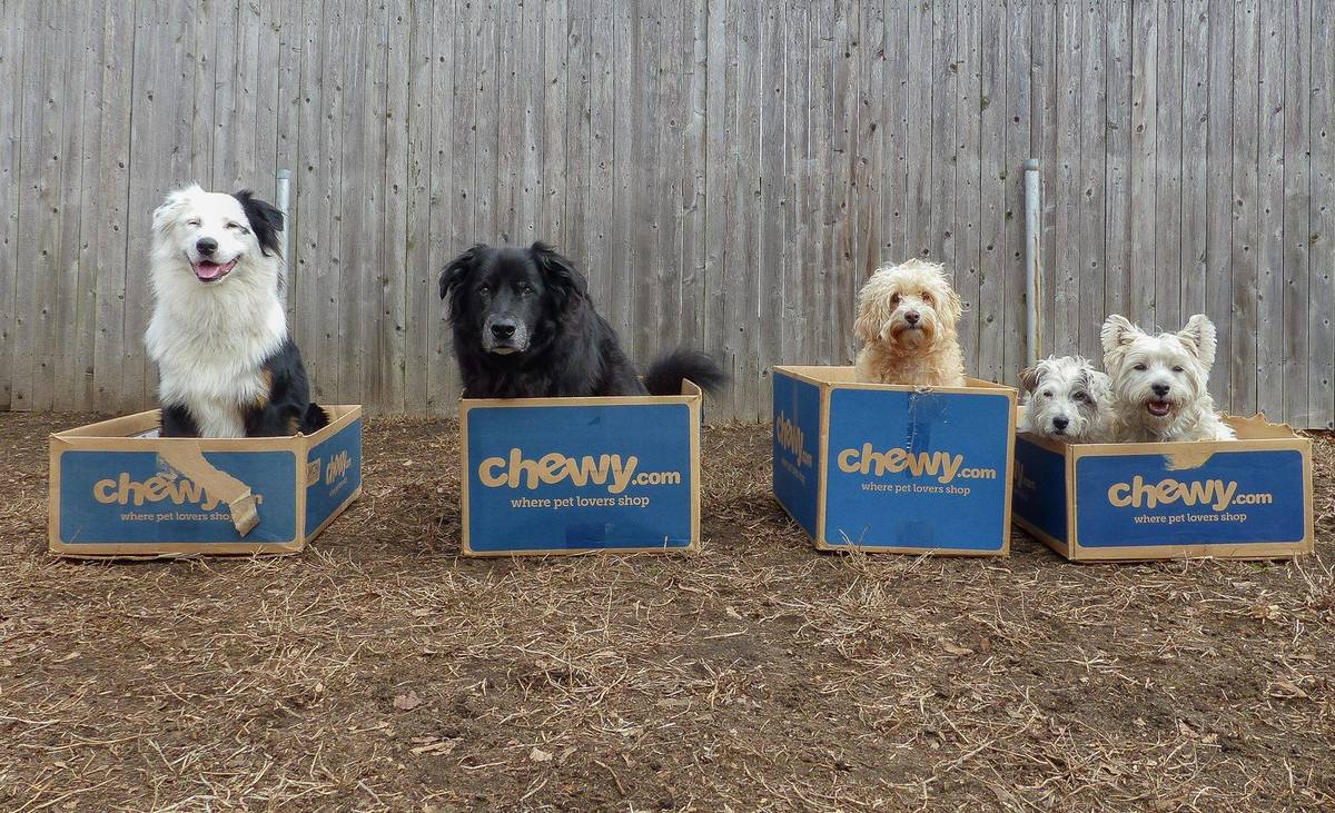 five dogs inside cardboard boxes with the chewy logo