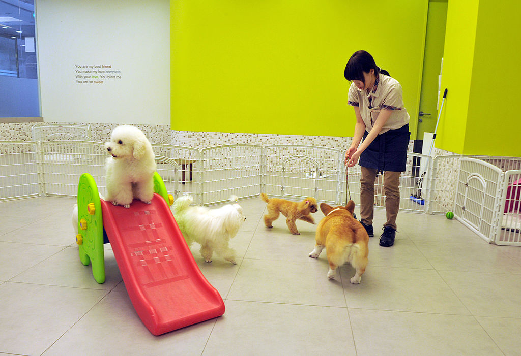 a woman playing with dogs at a dog daycare center