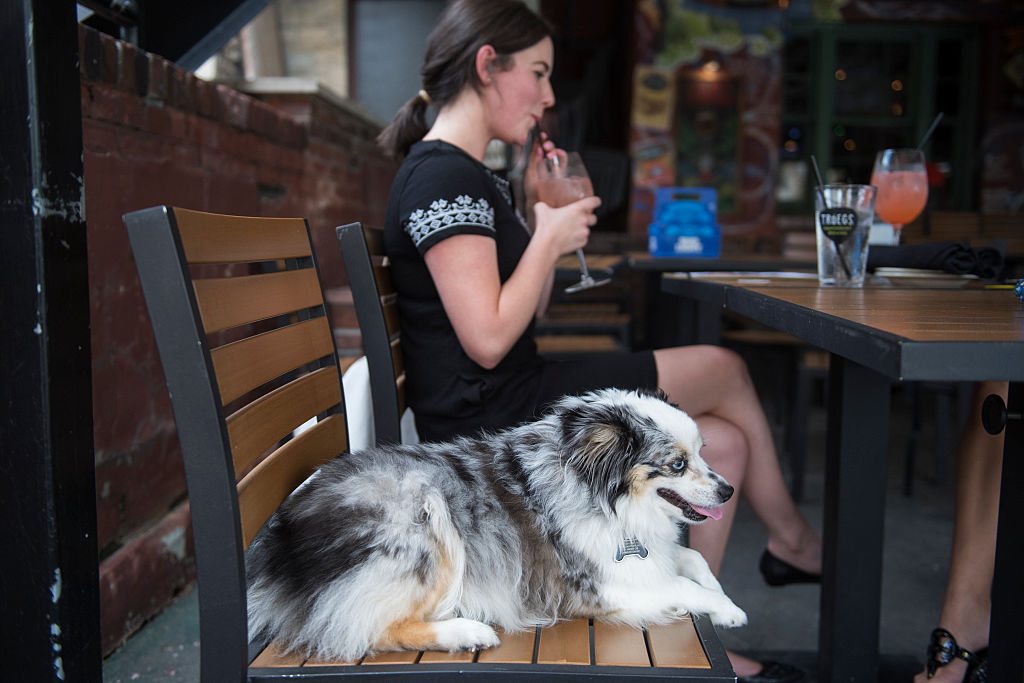 a woman at a restaurant with her dog