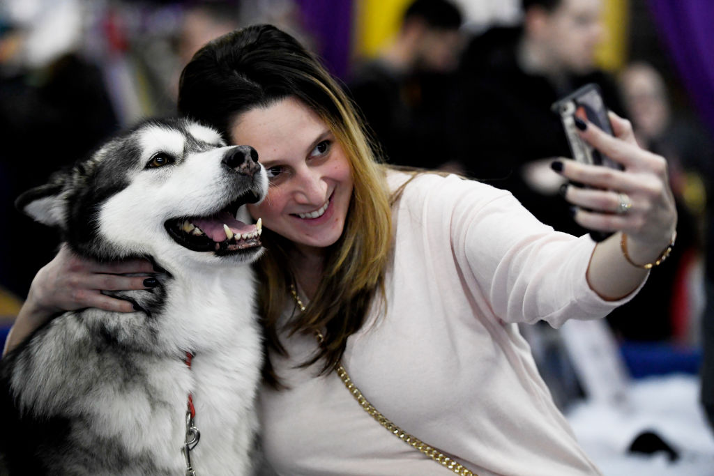a woman taking a selfie with an alaskan malamute dog