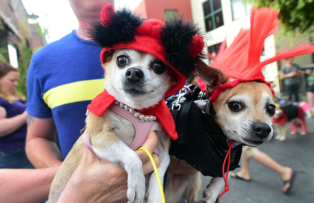 two small dogs dressed in funny costumes