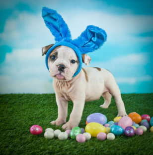 25 Adorable Dogs Ready for Easter